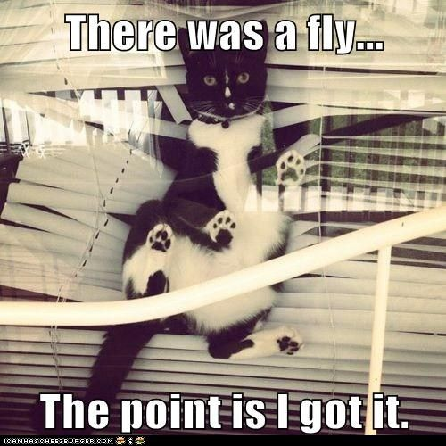 There was a fly...