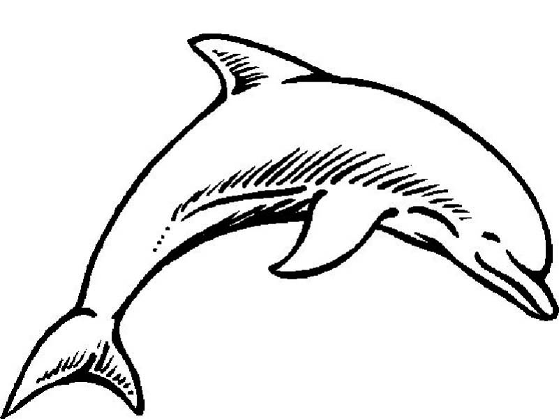 Dolphin Beauty Curve Page To Color Coloring Page : Kids ...