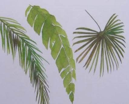 Palm Fronds Watercolor Trees Tropical Painting Watercolor Flowers