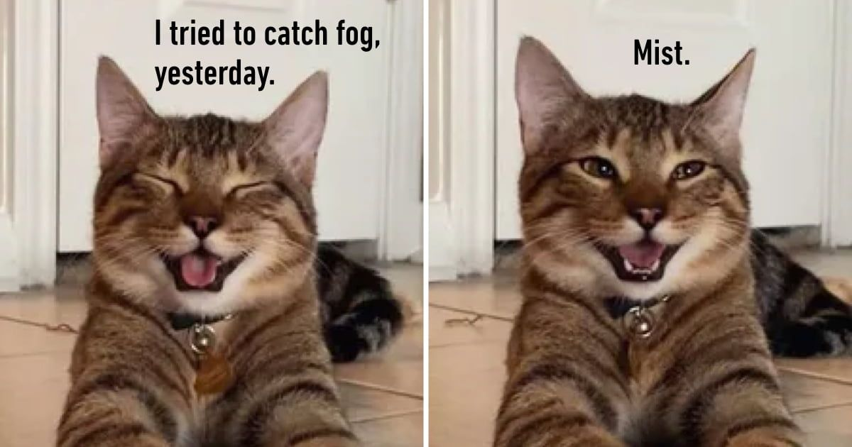 Cat With Beautiful Smile Becomes Dad Joke Meme in 2020 ...