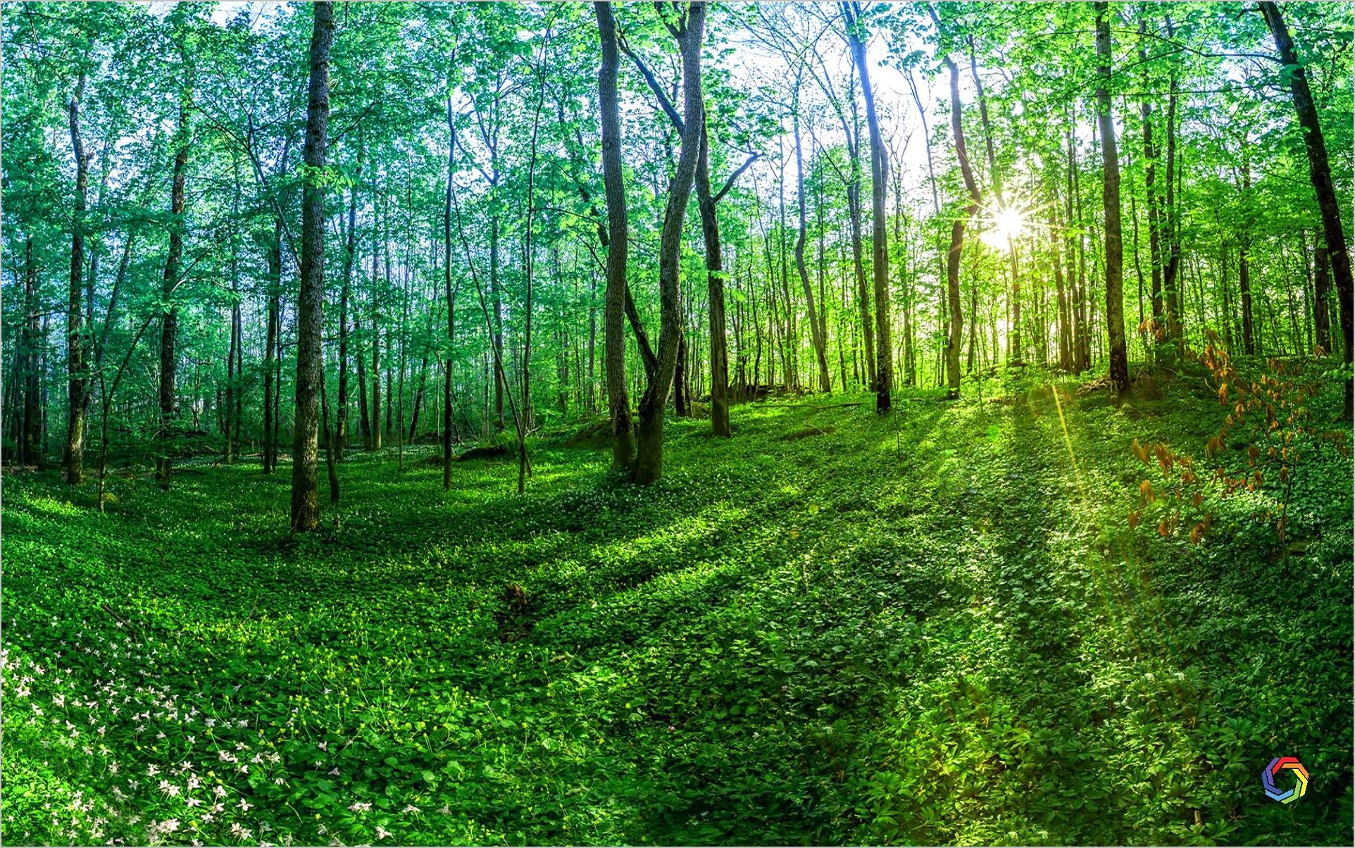 4k Wallpaper Nature Green In 2020 Nature Backgrounds Background Hd Wallpaper Green Nature Wallpaper