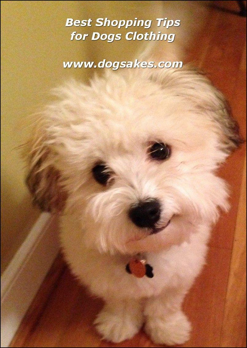 Interactive Dog Toys Exercise Dog Food Label - Dog Sakes