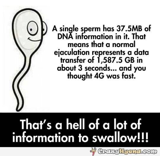 A single sperm has 37,5 MB of DNA information in it. That mens that a normal ejaculation represents a data transfer of 1,587,5GB in about 3 seconds... and you thought 4G was fast.