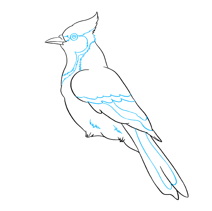 How To Draw A Blue Jay Really Easy Drawing Tutorial In 2020 Blue Jay Drawing Tutorial Easy Easy Drawings