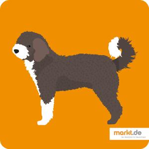 Spanischer Wasserhund Perro De Agua Espanol In 2020 Spanischer Wasserhund Hunde Spanisch