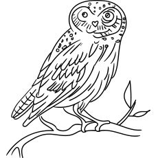top 25 free printable owl coloring pages online  owl coloring pages coloring pages eurasian