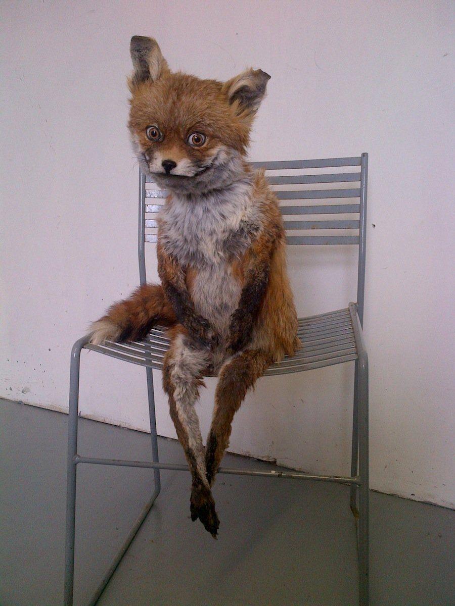 Бонд картинки, картинки смешной лисы которая устала