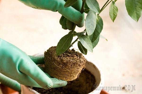 Пересадка комнатных растений – следуем правилам