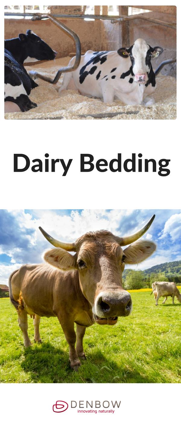 Dairy Bedding Forest animal bedding, Animals, Forest animals