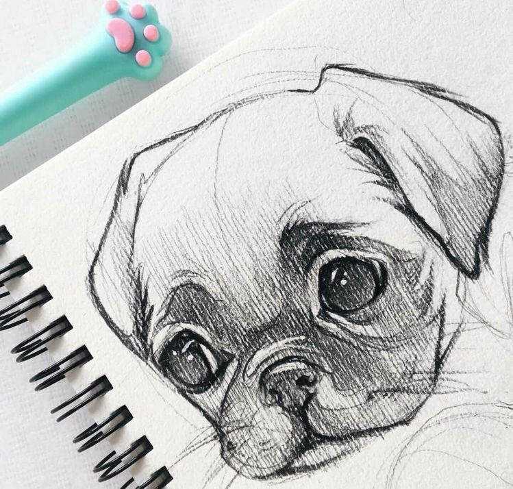 40 Free & Easy Animal Sketch Drawing Information & Ideas - Brighter Craft