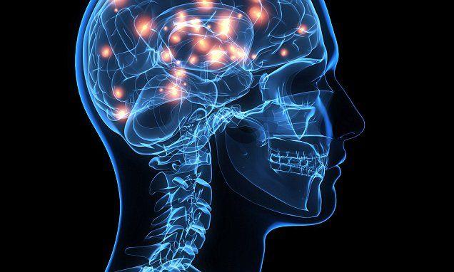Scientists identify the brain rhythm that makes memories permanent