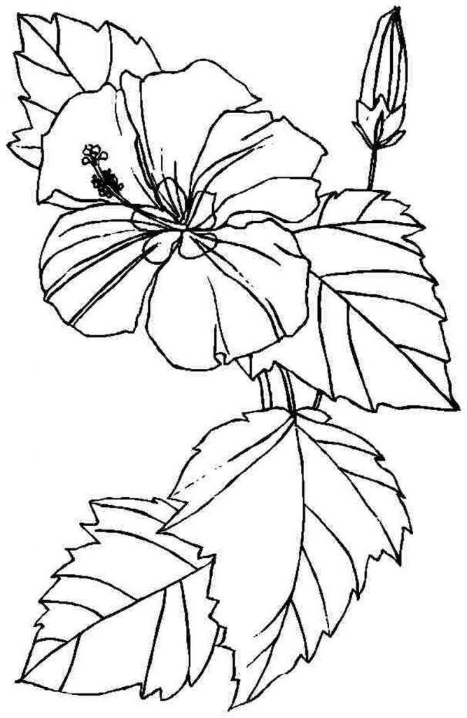 Free Printable Hibiscus Coloring Pages For Kids | Coloring pages ...