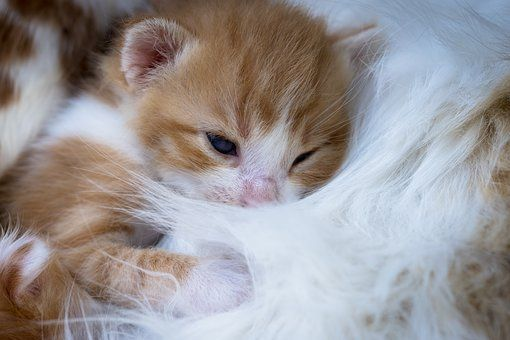 Kittens Photos Pixabay Download Free Images Cute