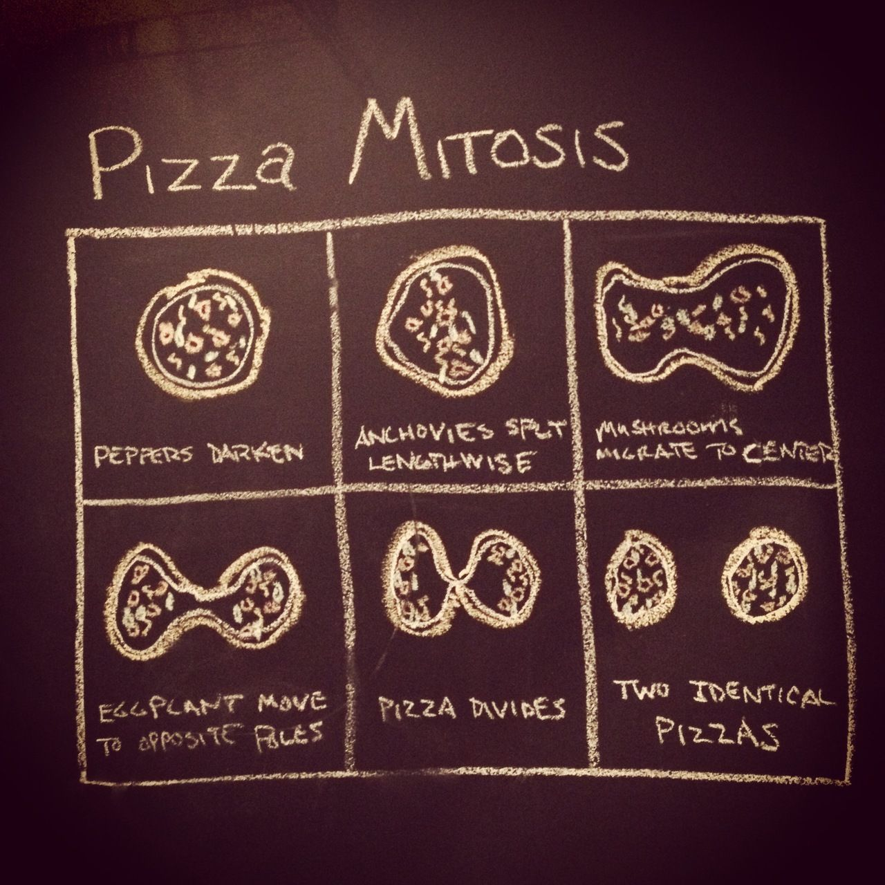 Pizza Mitosis Good Way To Introduce Cell Mitosis