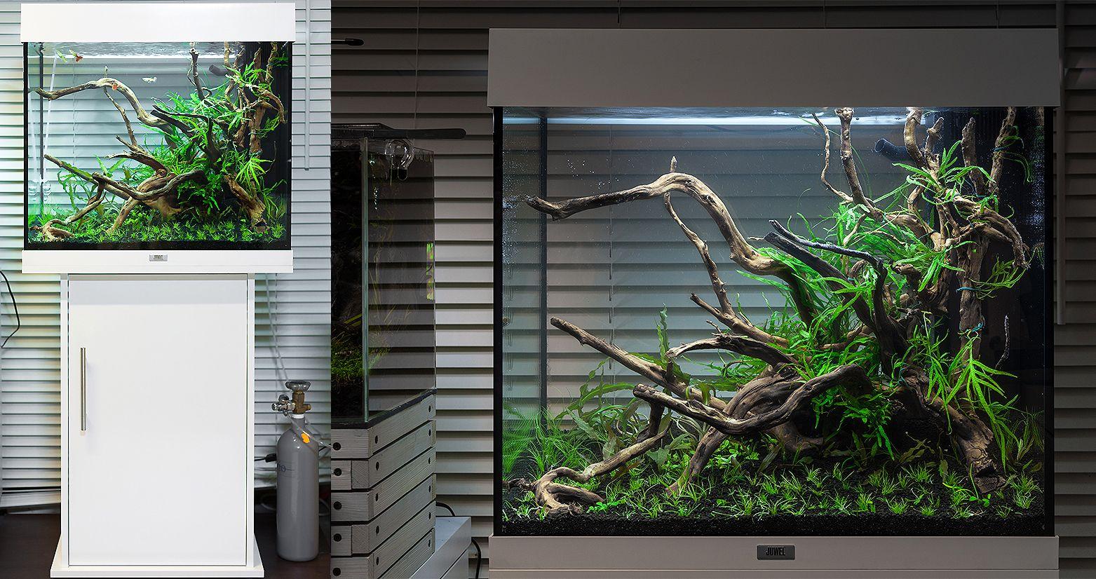 juwel lido 120 aquarium pinterest aquariums and aquarium aquascape. Black Bedroom Furniture Sets. Home Design Ideas