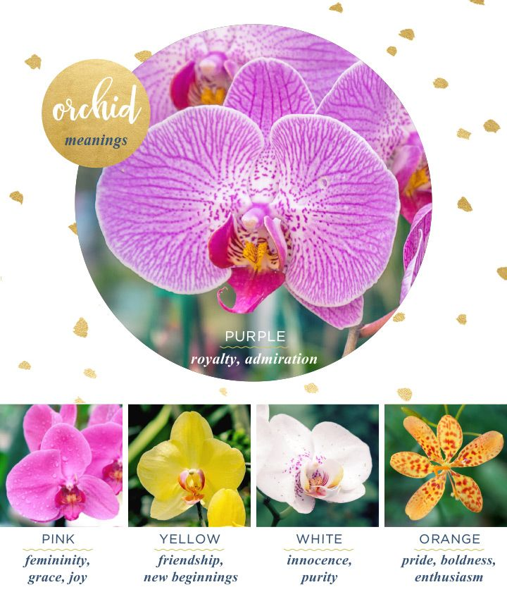 Orchid Meaning And Symbolism Flower Meanings Orchid And Exotic
