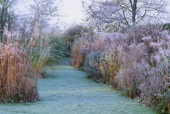 Blades of glory alan titchmarshs tips for growing ornamental winter ornamental grasses in winter workwithnaturefo
