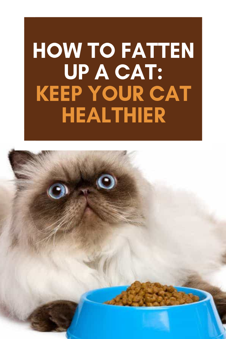 How to Fatten Up a Cat Cat nutrition, Cat reading, Cats
