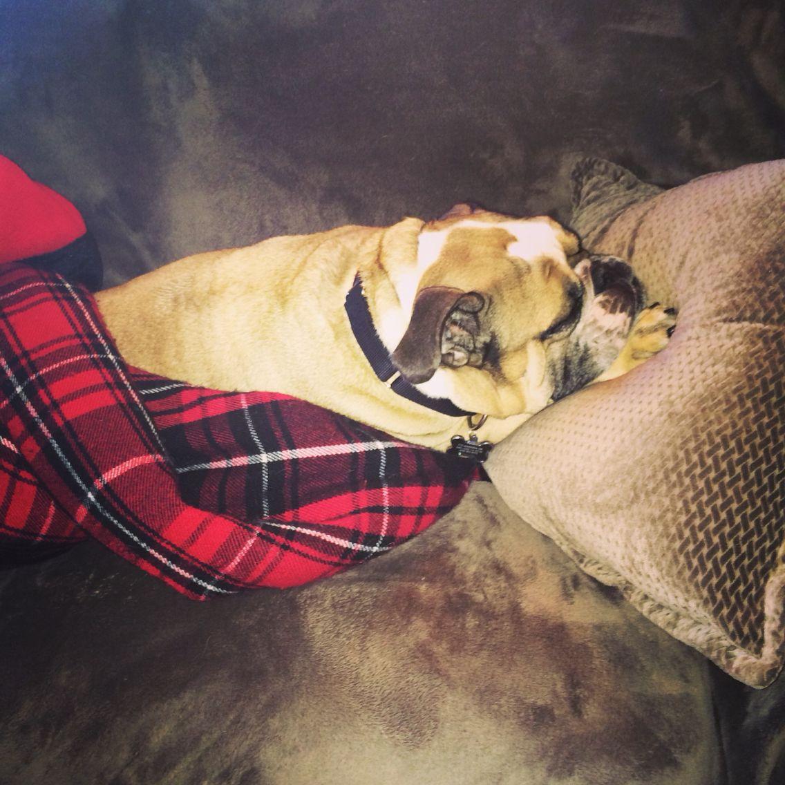 Sleepy bulldog #dog