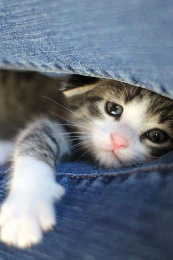 Pin On Cat Stuff