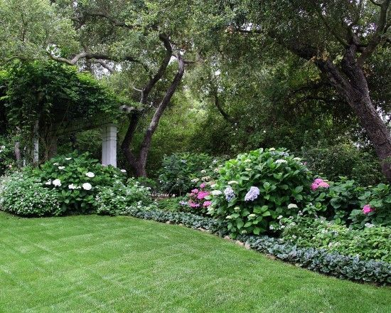 Back yard shade garden using classic garden favorites, including Hydrangea, Heliotrope and Ajuga. yard shade garden using classic garden favorites, including Hydrangea, Heliotrope and Ajuga.