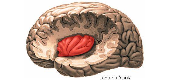 Aula de Anatomia | Telencéfalo | Neuro | Pinterest | Anatomía y Aula