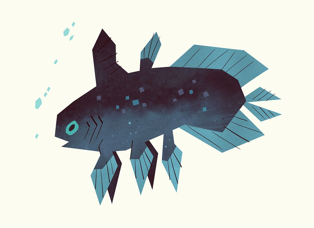 Coelacanths Were Thought To Be Extinct Until A Live One