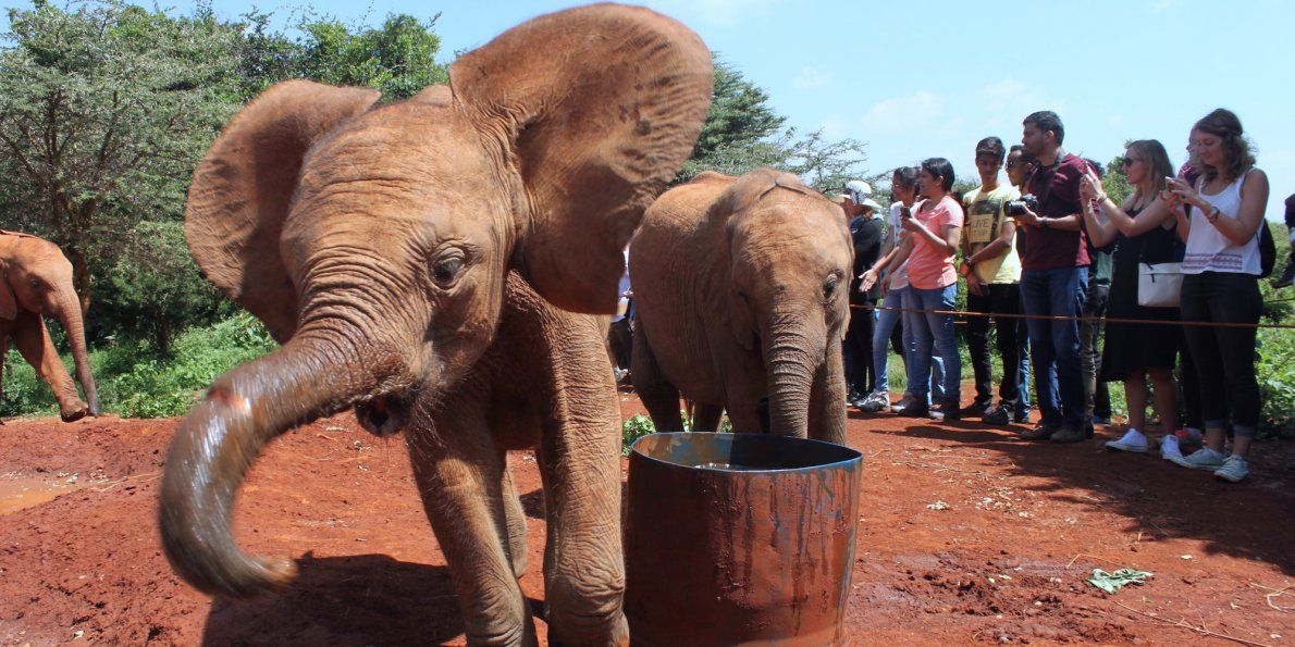 Elephant Auto Insurance Quote Brilliant I Visited A Baby Elephant Orphanage In Kenya — Here's What It Was . Decorating Inspiration