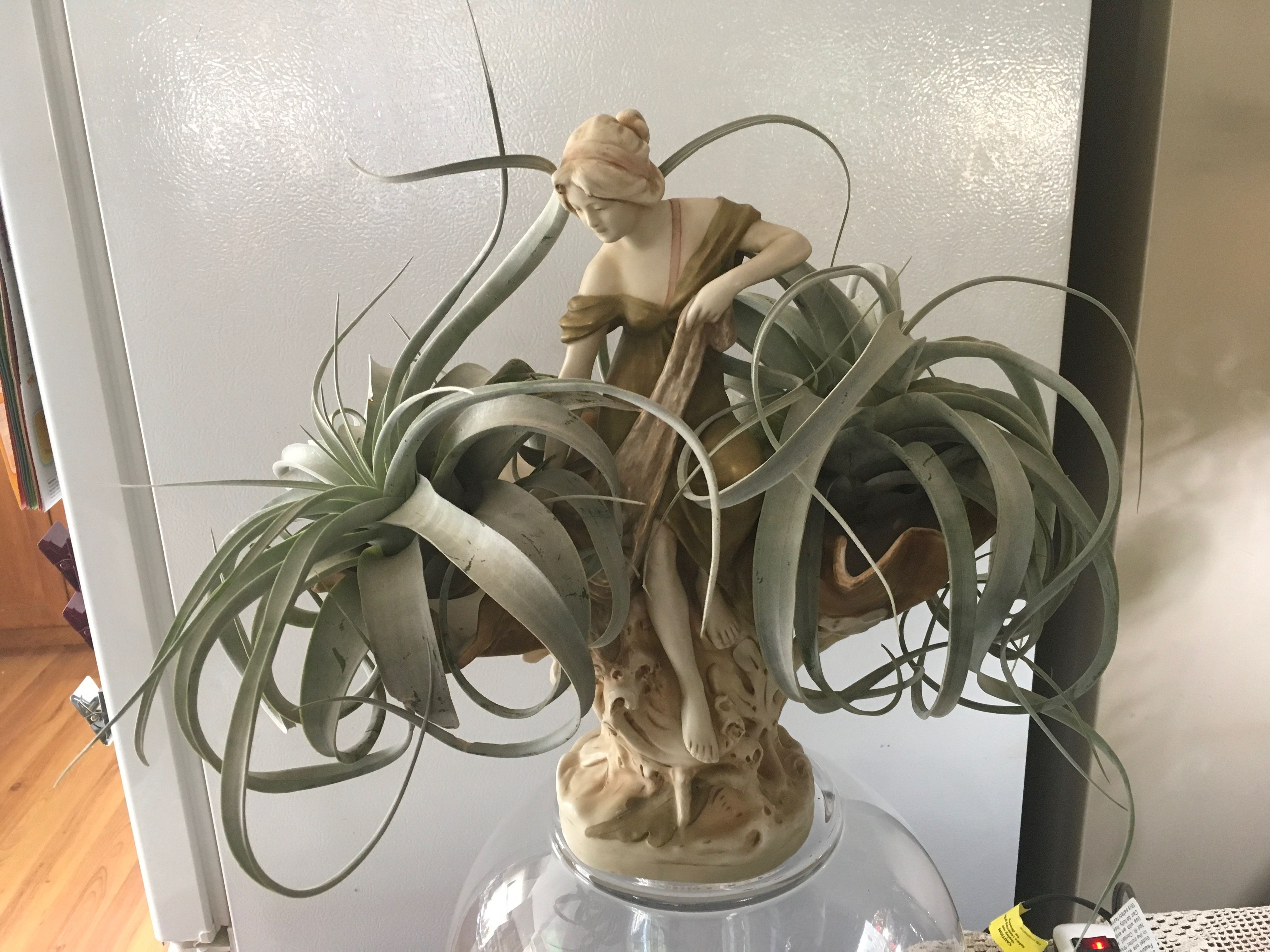 Pin By Dahlia Azul On Air Plants Pinterest Air Plants Terraria