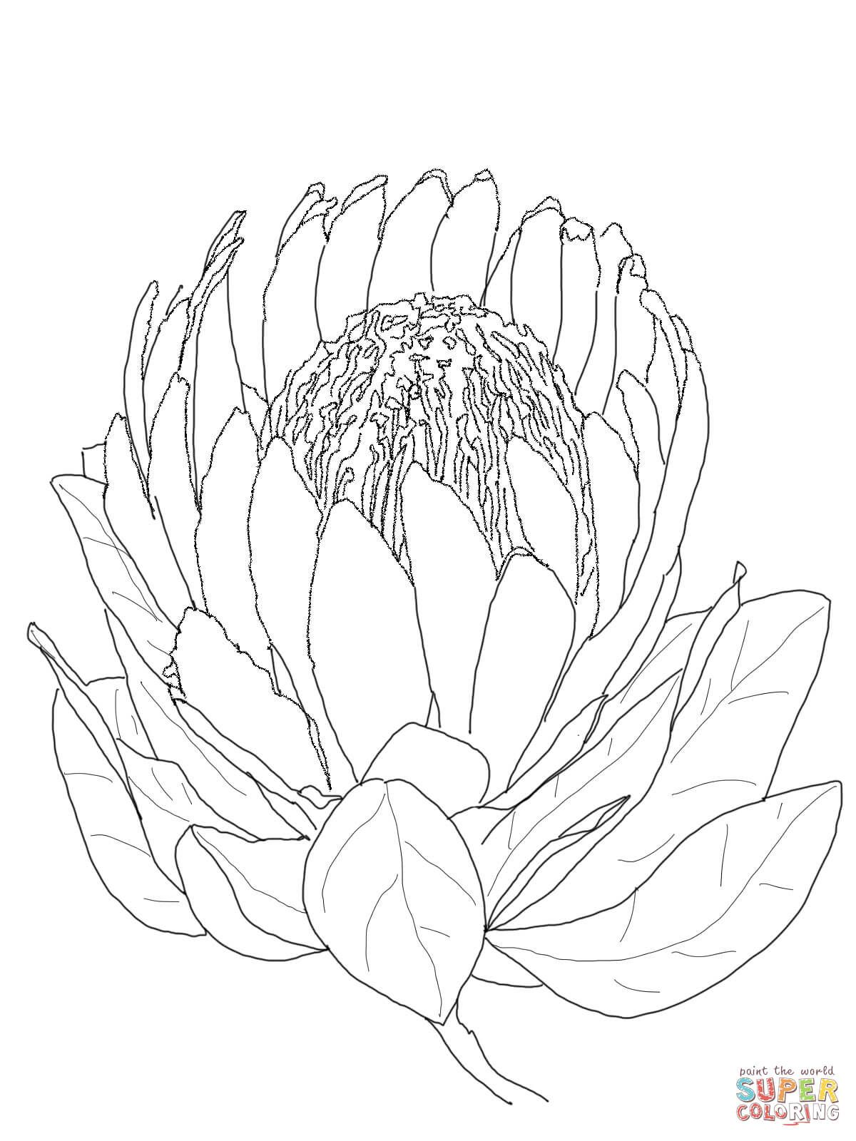 Protea Flower Coloring Page From Protea Category Select From 29179 Printable Crafts Of Cartoons Nature Animals Bibl Protea Art Flower Drawing Protea Flower