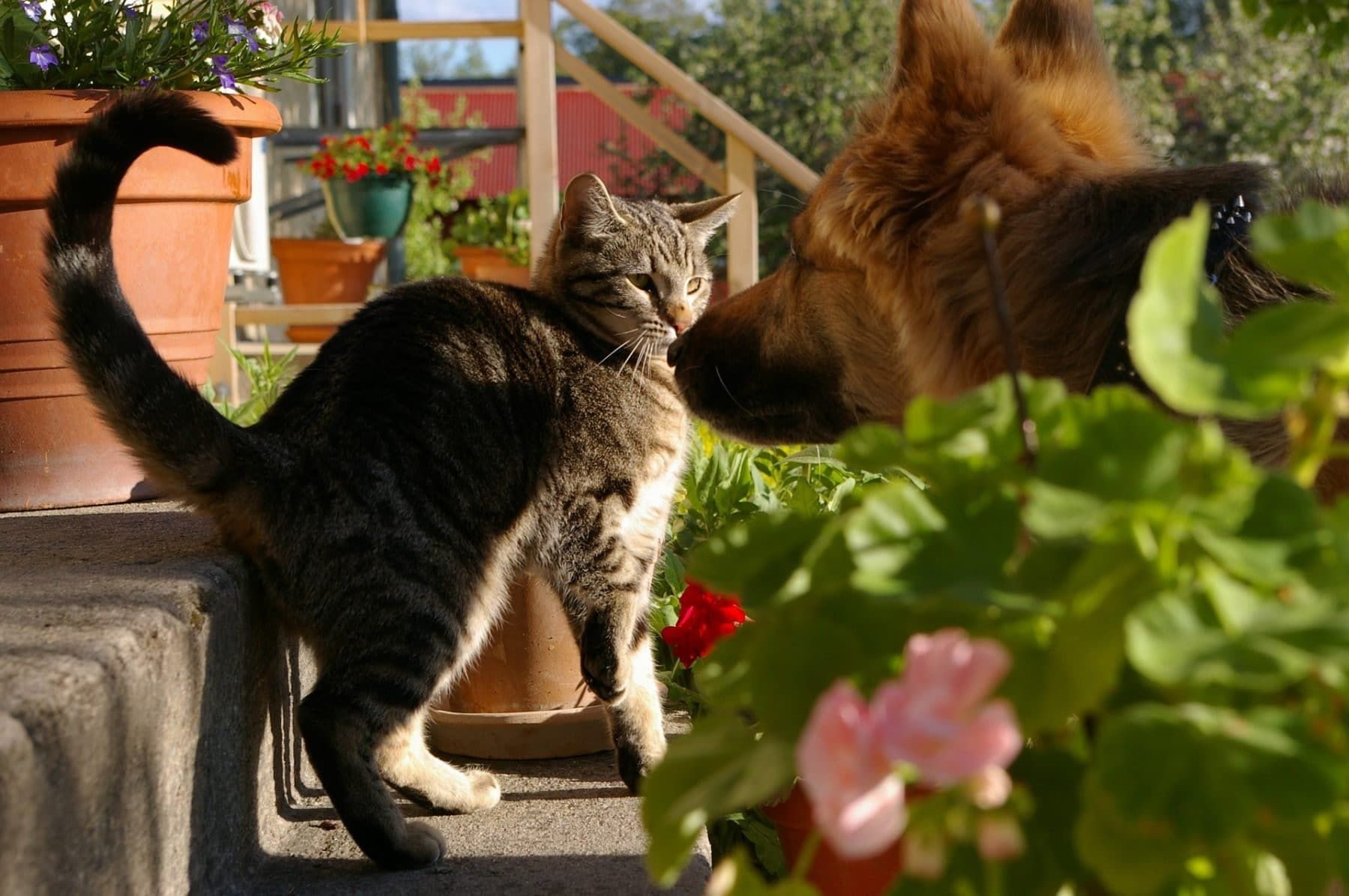 How To Introduce A Cat To A Dog Household A Step By Step Guide