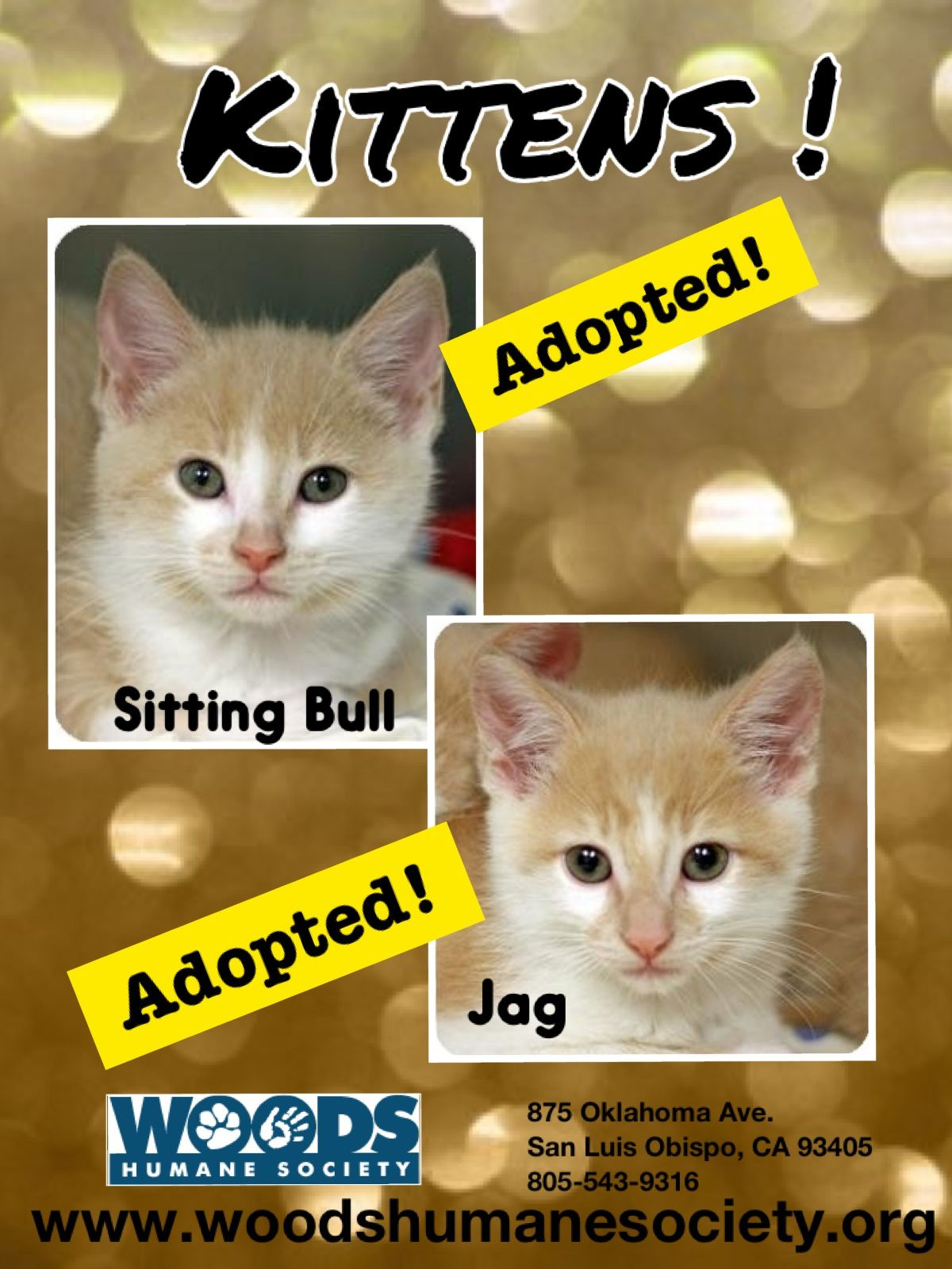 Adopted! Kittens, Humane society, Cat pics
