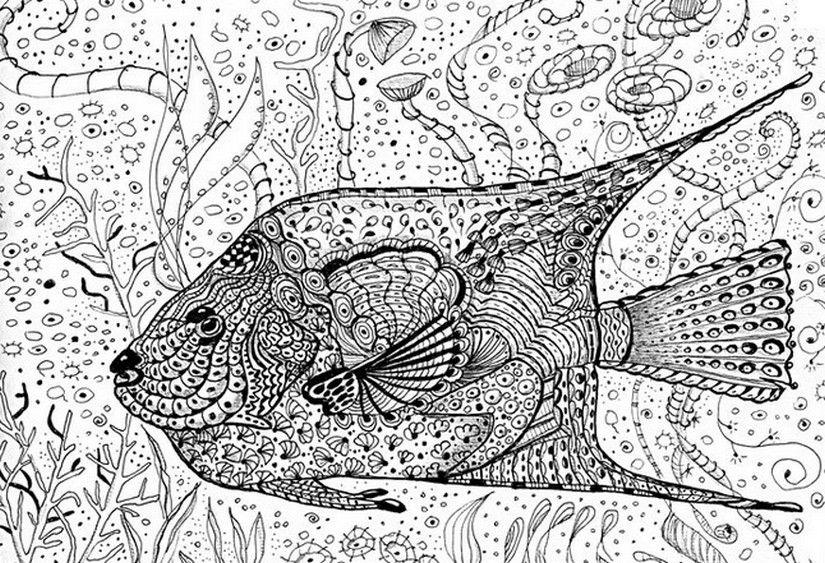 Pin Auf Coloring Marine Life