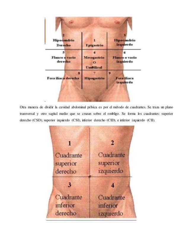dolore pelvico zones definition