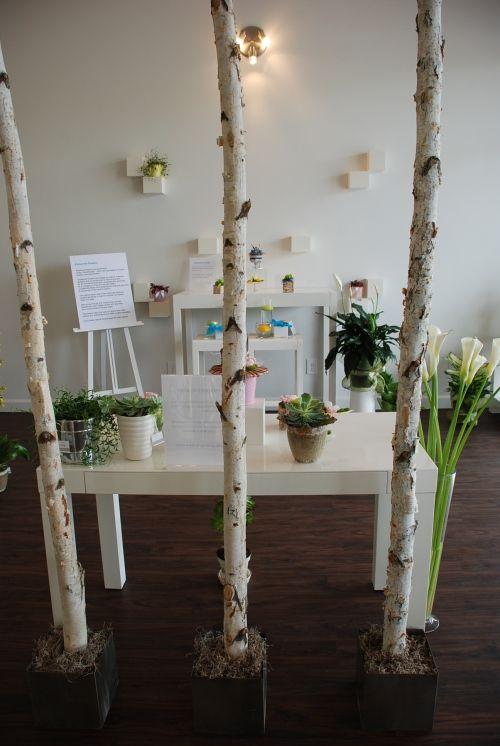 Interesting Display Birch Poles In Planters On Floor