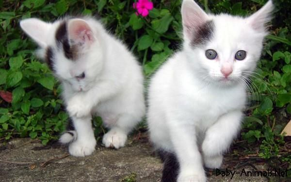 Cute White Baby Cats Wallpaper Baby Cats Cute Cat Wallpaper