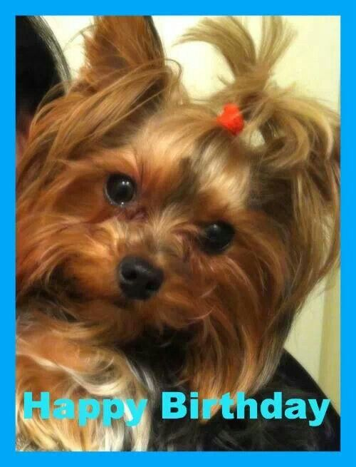 Happy Birthday Dolce Happy Birthday Pictures Happy Birthday Aunt Dog Birthday