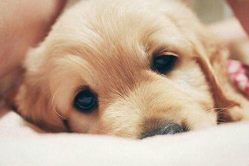puppyy