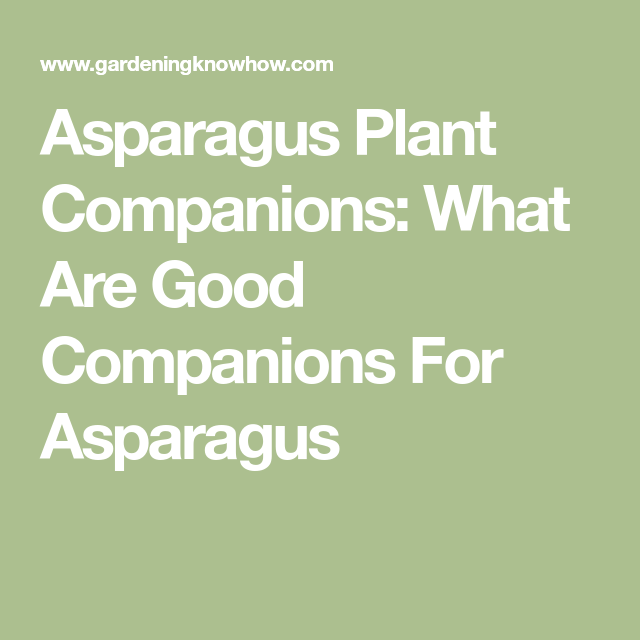 Asparagus Companion Plants – What Grows Well With 400 x 300
