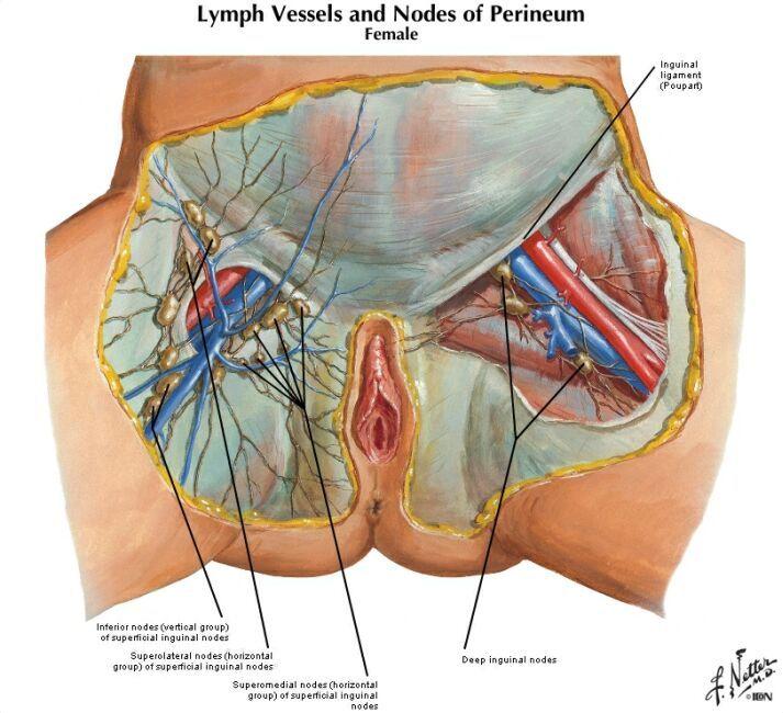 Swollen Lymph Nodes Neck Locations Lymph Nodes Are Important Part