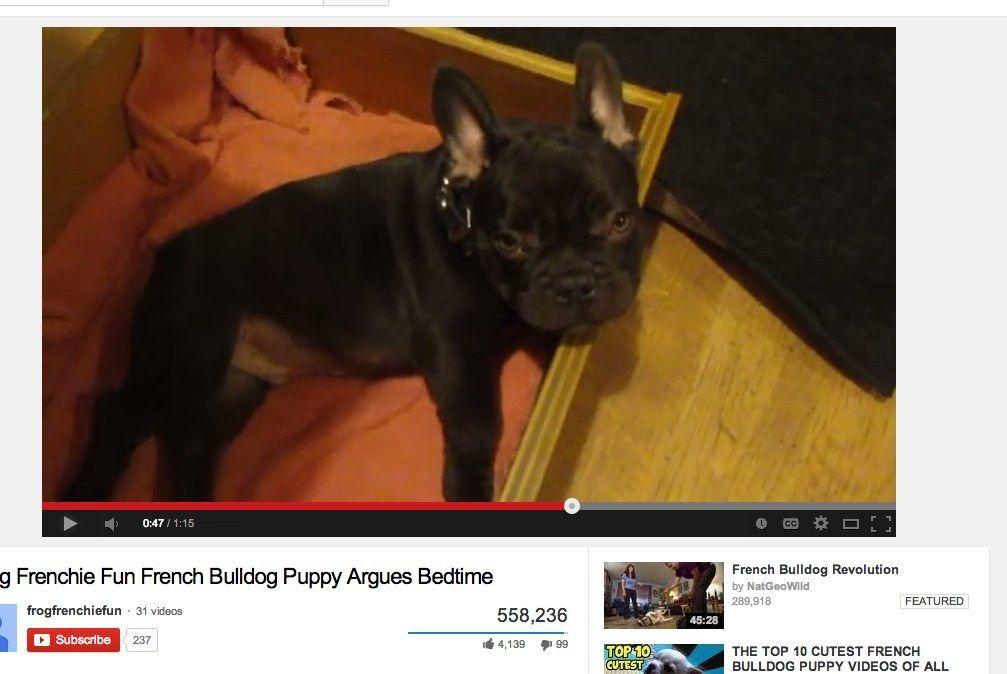 Frog The French Bulldog Puppy Really Hates Bedtime French