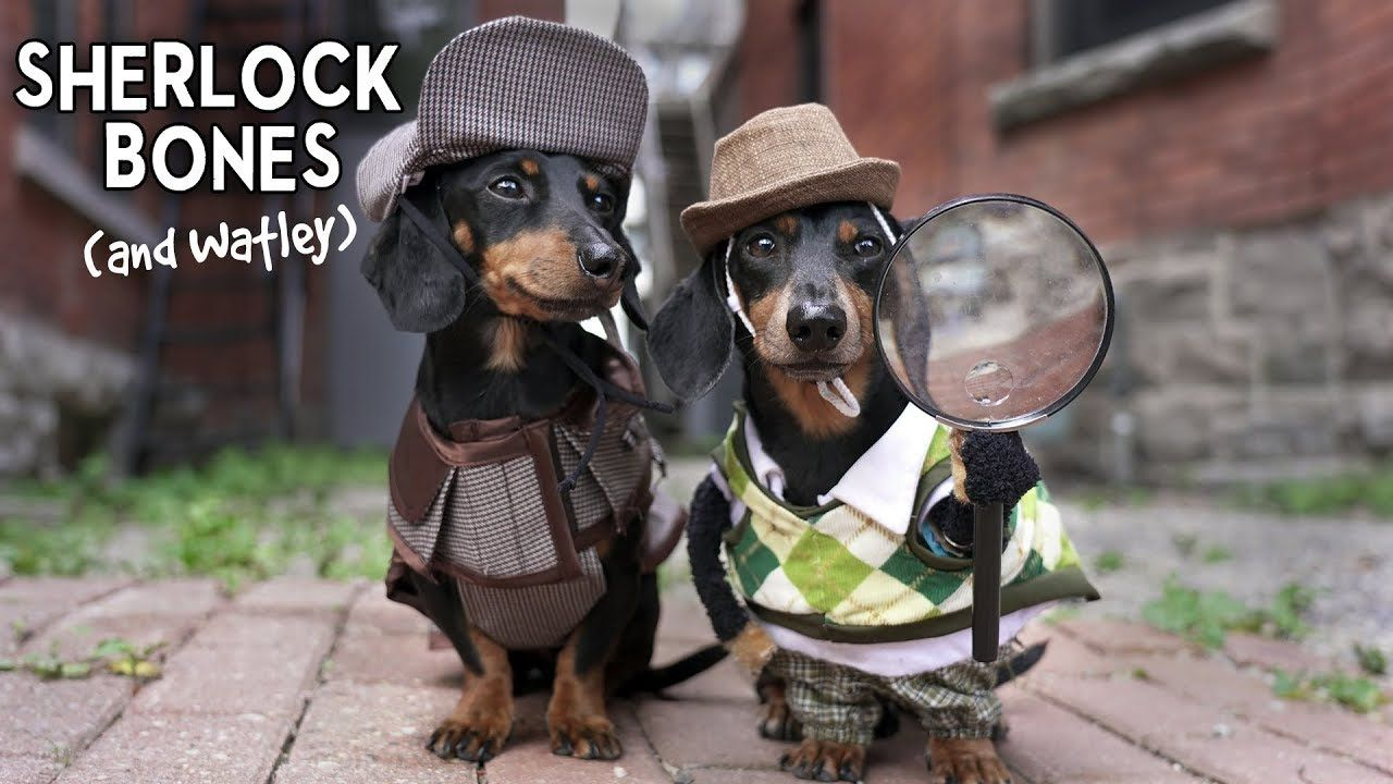 Ep 11 Sherlock Bones Watley Cute Dog Detectives Video