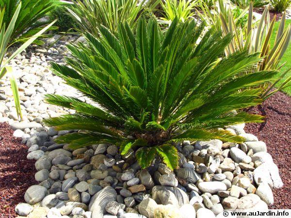 Paillage esth tique avec galets et pouzzolane jardin for Jardinage decoration jardin