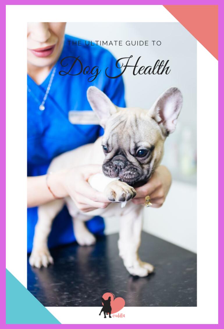 Dog Health Guide For First Time Dog Moms Dog Care Health Tips Dog Grooming Tips Diy D In 2020 Dog Health Dog Vet Care Dog Care