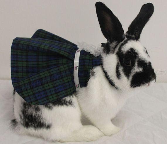 Bunny in Tartan