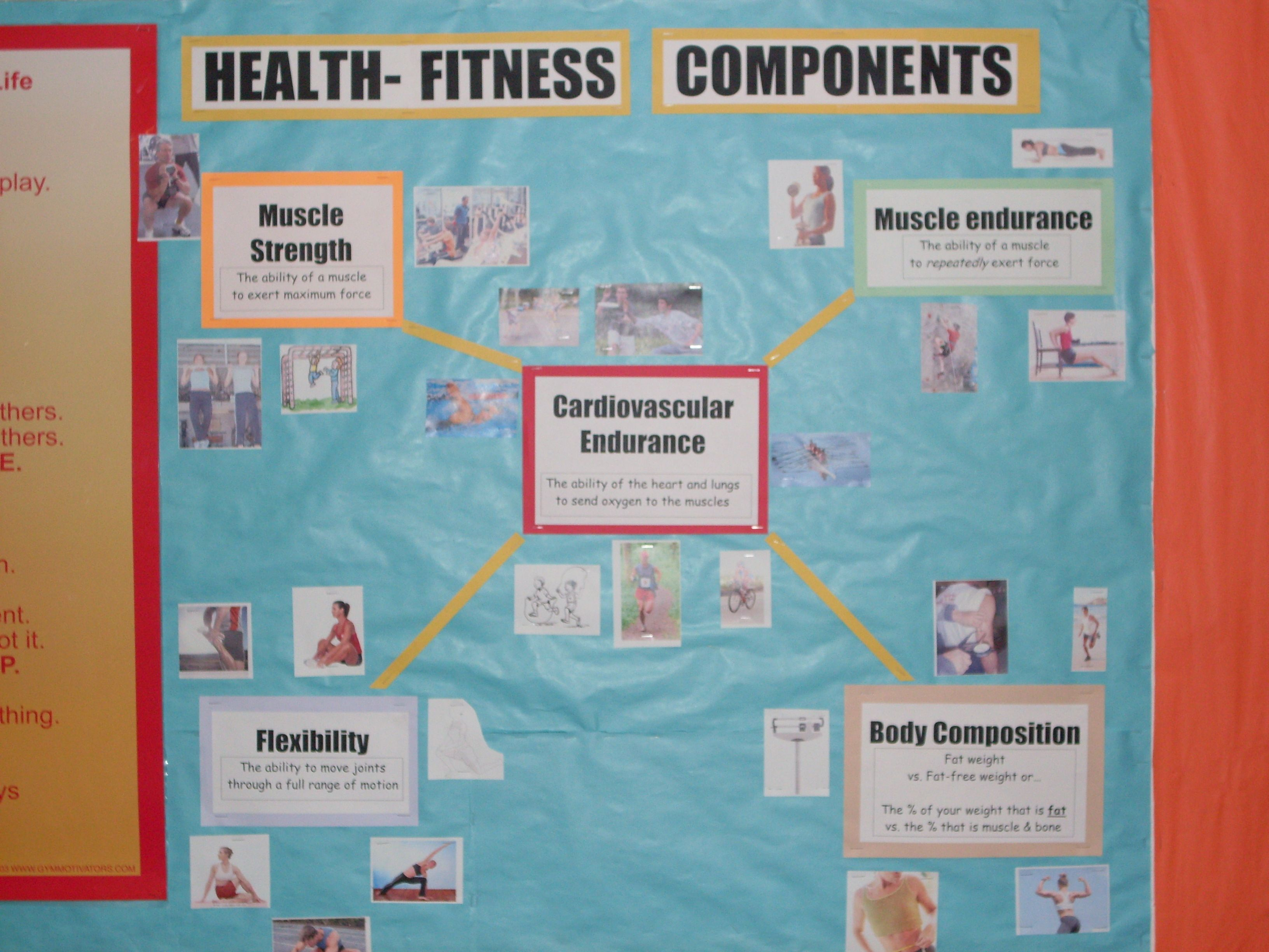 Components Of Physical Education Bulletin Board