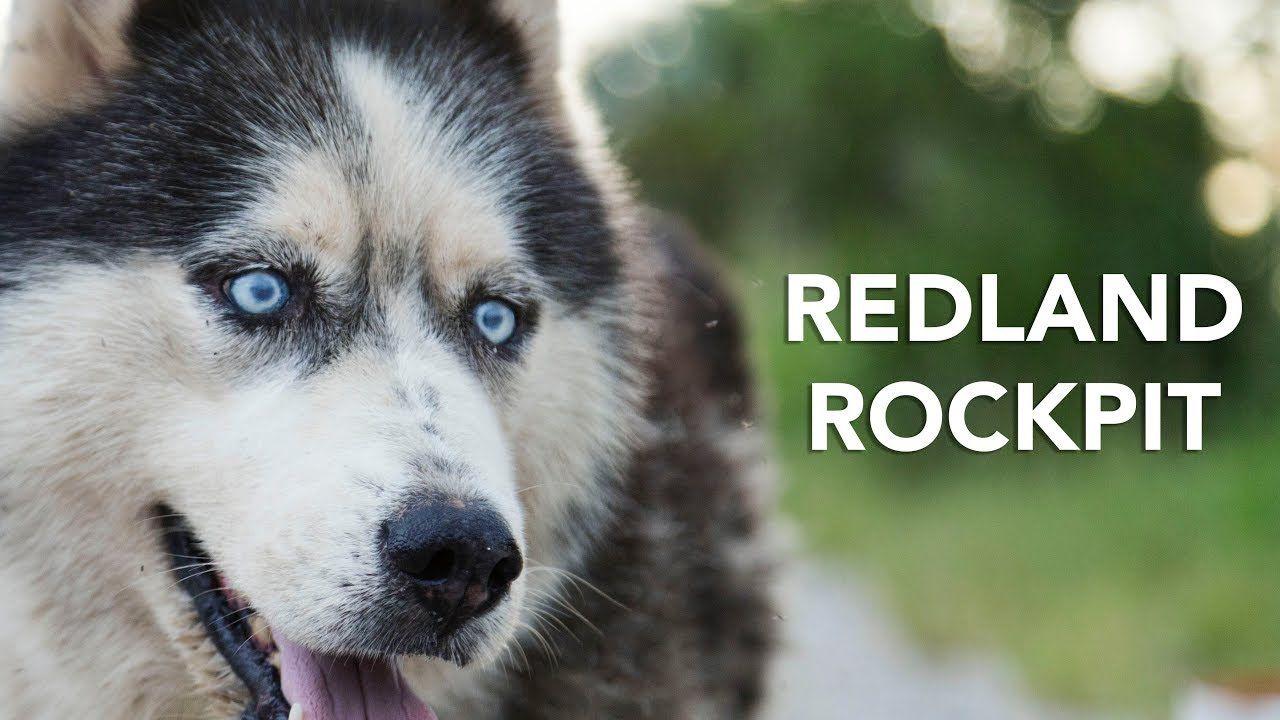 Redland Rockpit Redland Dog Adoption Homeless Pets
