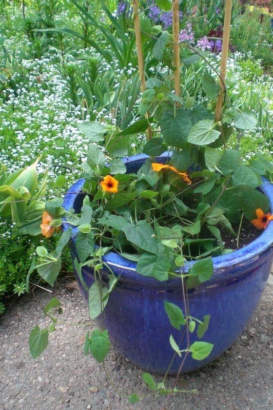 JeffCo Gardener  Saving Soil When Planting Large Planters by Caroline  Reardon. JeffCo Gardener  Saving Soil When Planting Large Planters by