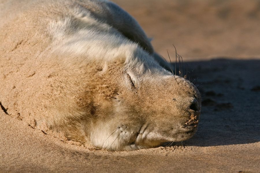 Seal Pup Sleeping by Mark Monckton photography on 500px