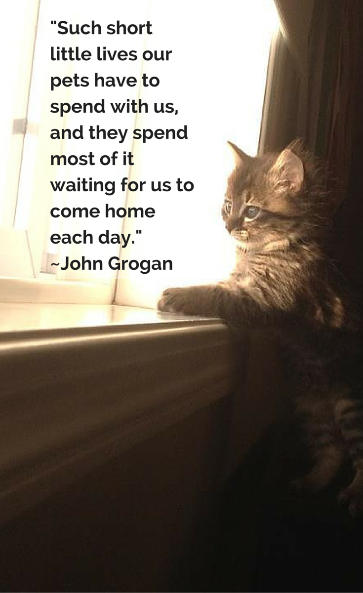 12 Inspirational Quotes All Animal Lovers Should Know